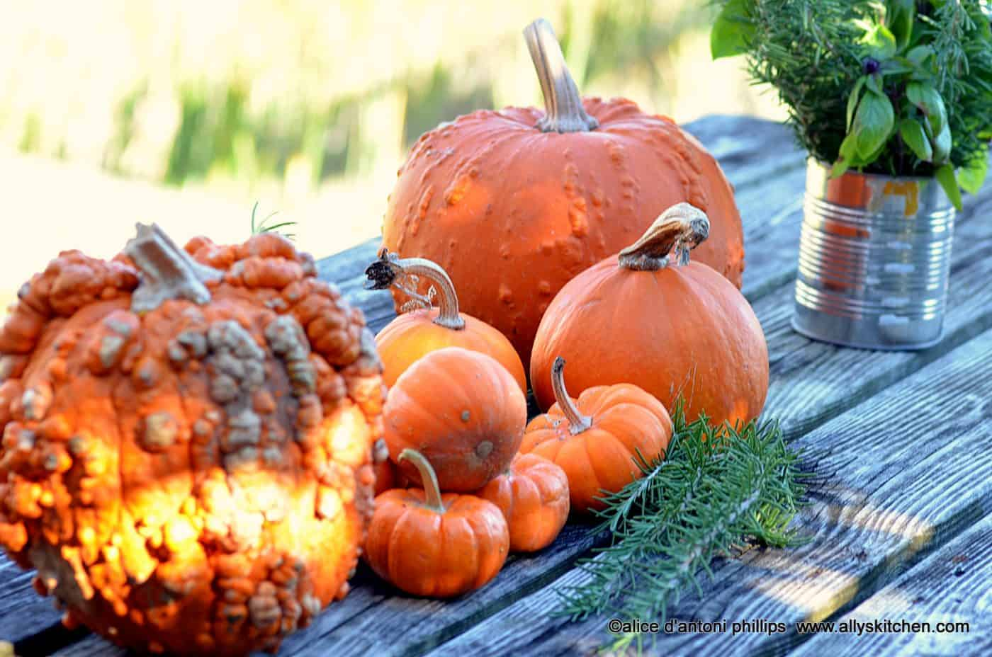 pumpkin patch recipes