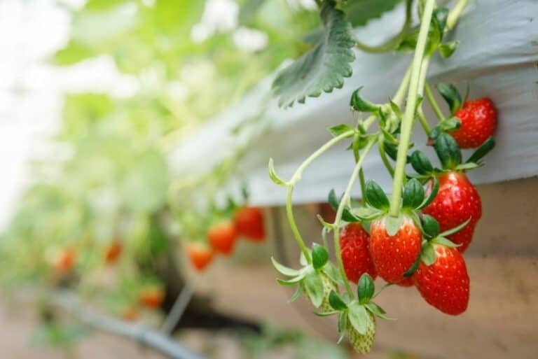 The Different Things You Can Grow with Hydroponics