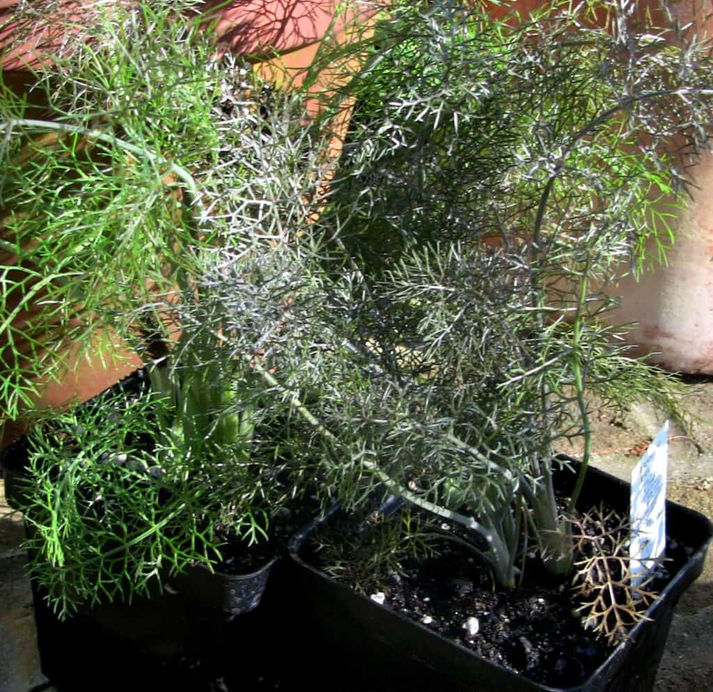 The Powerful Health Benefits of Fresh Herbs