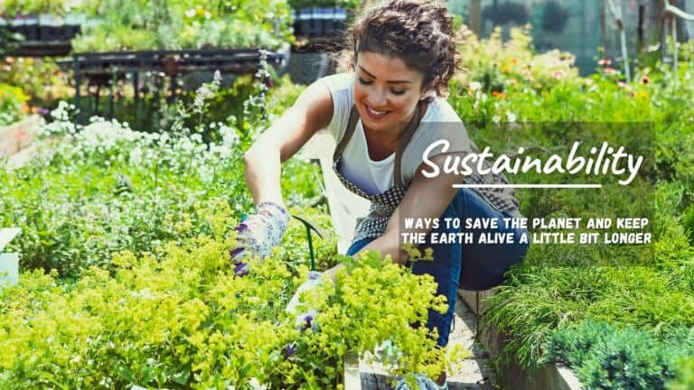 Ways To Bring Sustainability Into Your Life